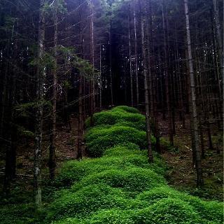 Grünes Band neben Waldweg