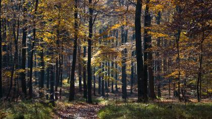 Herbstwald an der Hohen Acht