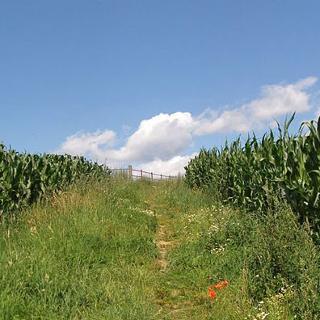 Feldweg zum Scheidkopf hoch