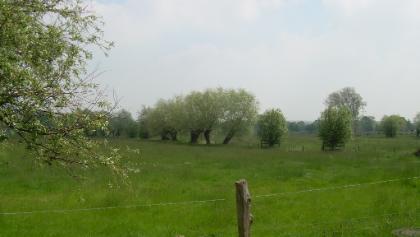 Nierswiesen (Pfingsten 2010)
