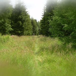 Im Zauberwald (Juli 2011)