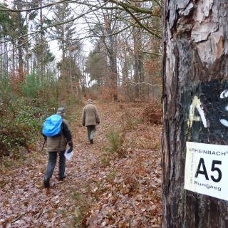 Auf dem Wanderweg 5 zwischen Todenfeld und Hilberath