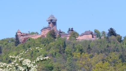 Blick von Langenberg auf die Haut-Koenigsburg