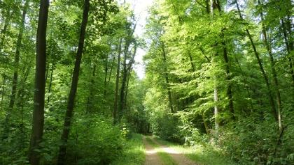 Wald um die Grube Messel