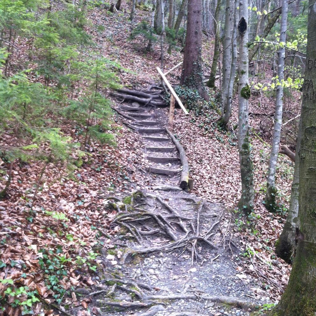 Am Reitnerbach führt ein steiler Pfad bergauf (Antonie Schmid)