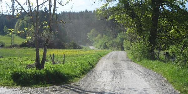 Beginn der Forststraße