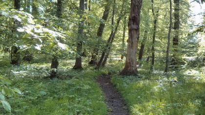 Trail im Wald
