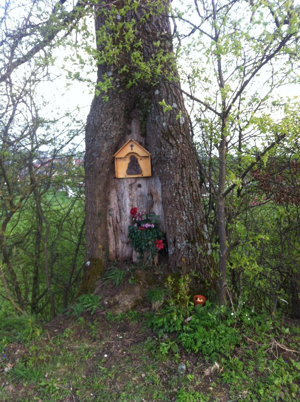 Bildnis in einem Baum (Antonie Schmid)