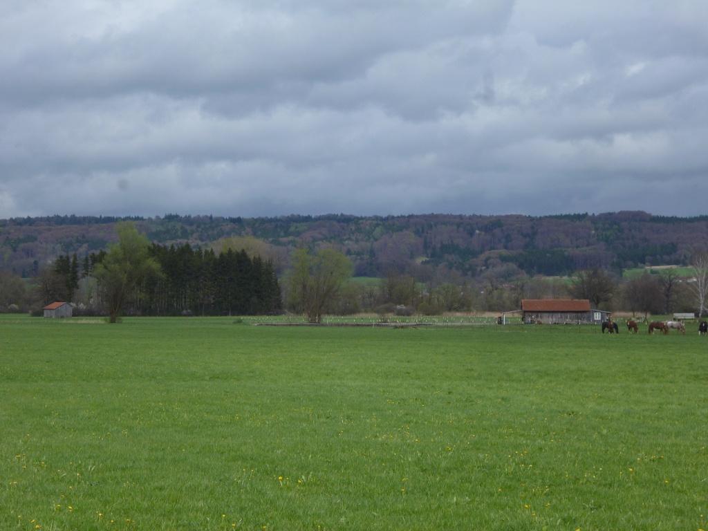 Am südöstlichen Ende des Weidengrabens befindet sich eine Pferdekoppel. (Monika Heindl)