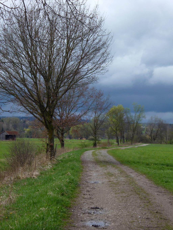 Idyllisch führt der Weg nun am Weidengraben entlang um den Ort. (Monika Heindl)