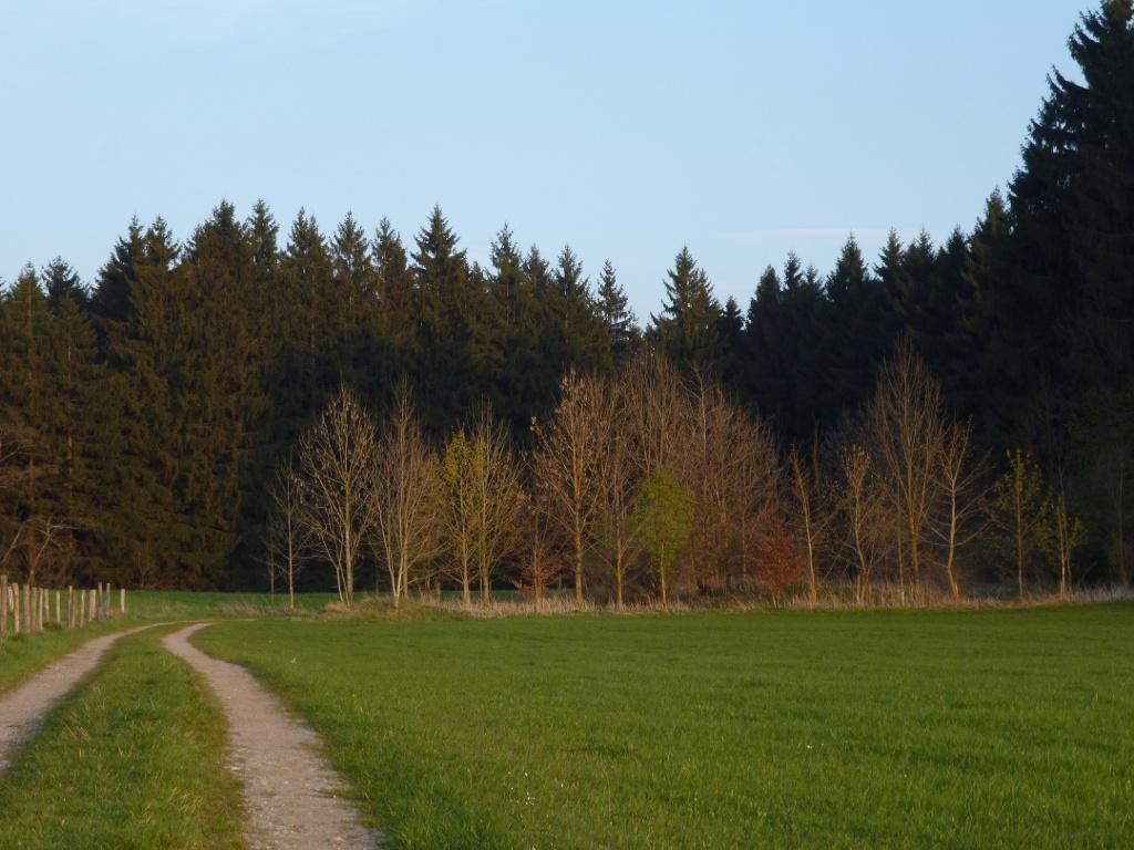 Auf breiten Forstwegen geht es durch Wald und Wiesen. (Monika Heindl)