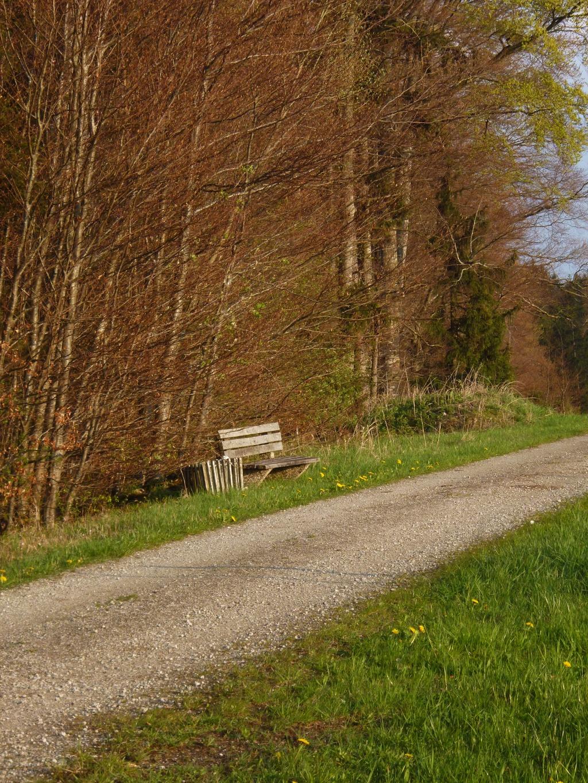 Direkt am Weg über den Schellenberg stehen mehrere Bänke, von denen man das herrliche Panorama genießen kann. (Monika Heindl)