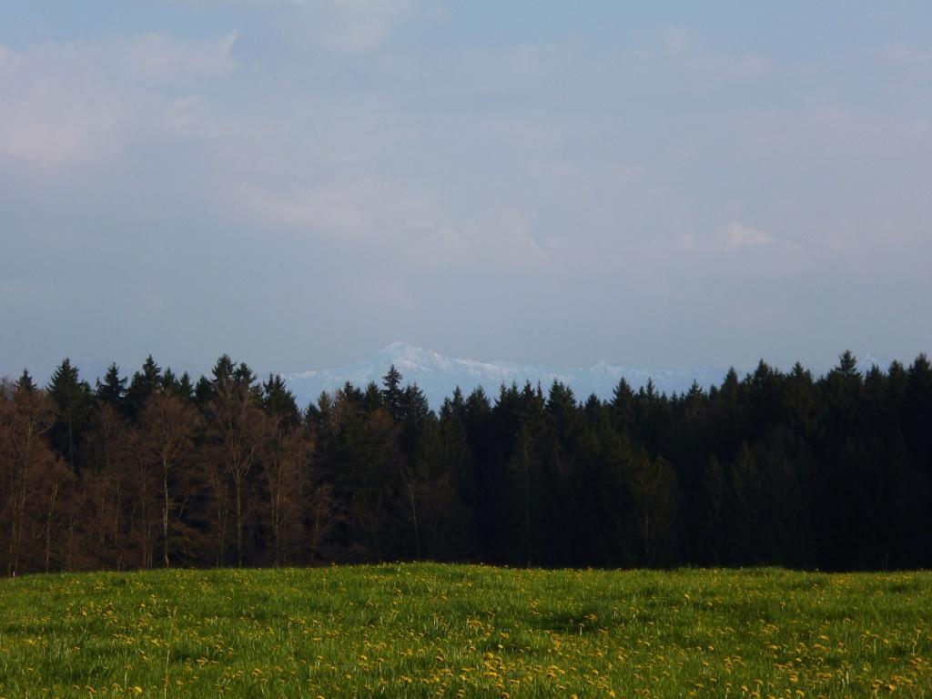 Grandioser Blick vom Schellenberg auf die Bayerischen Alpen. (Monika Heindl)