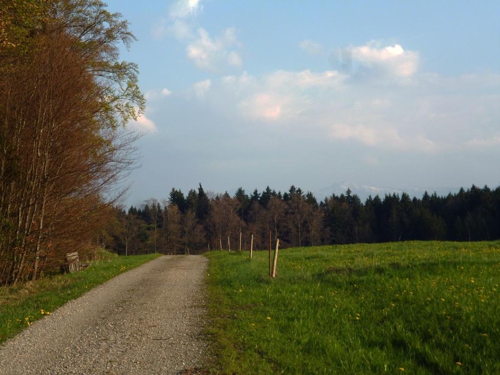 Panoramareich führt der Weg über den Schellenberg. (Monika Heindl)
