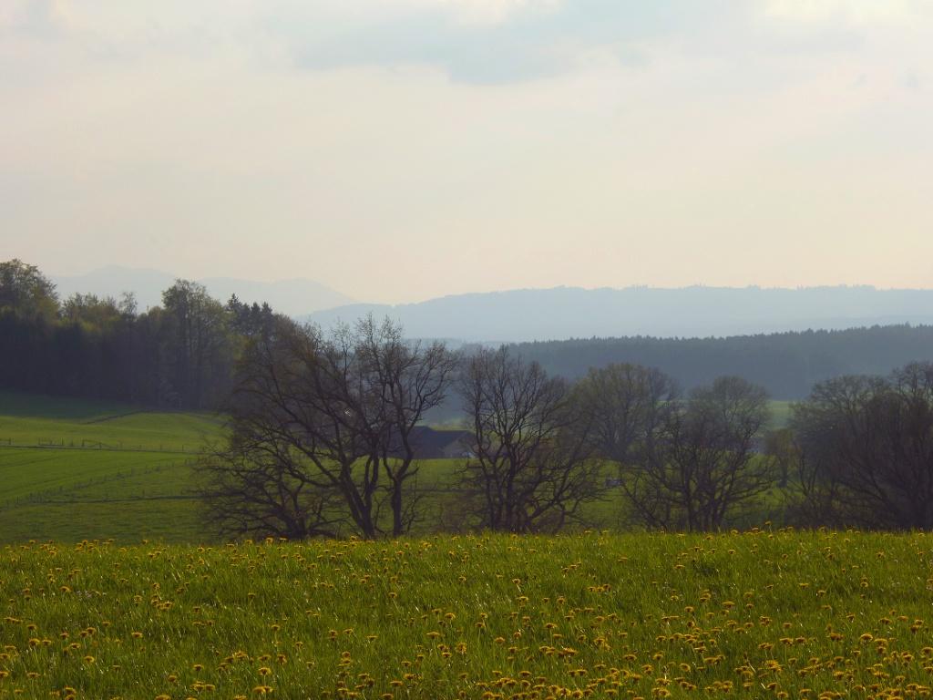 Idyllischer Blick vom Schellenberg nach Südwesten. (Monika Heindl)