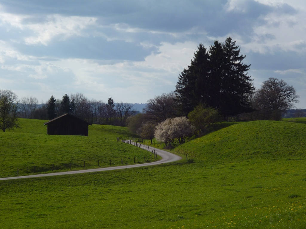 Mitten durch die idyllische Hügellandschaft führt der Weg vom Schellenberg zurück nach Eberfing. (Monika Heindl)