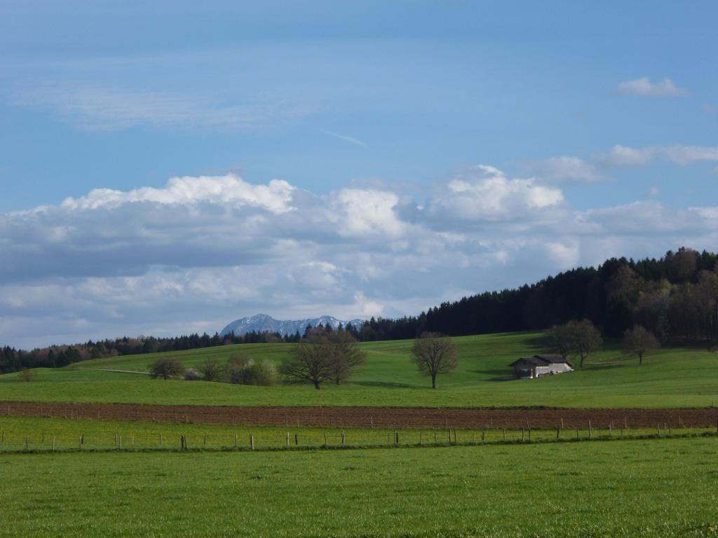 Wunderschöner Blick über die grünen Wiesen und Felder hinweg auf die Bayerischen Alpen. (Monika Heindl)