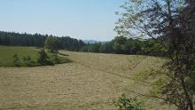 Grasellenbach: Nordic Walking Tour - Durchs idyllische Gassbachtal