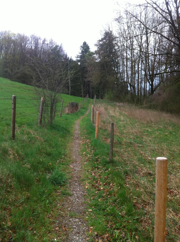 Ein Wiesenpfad bringt uns nach Schafbichl (Antonie Schmid)