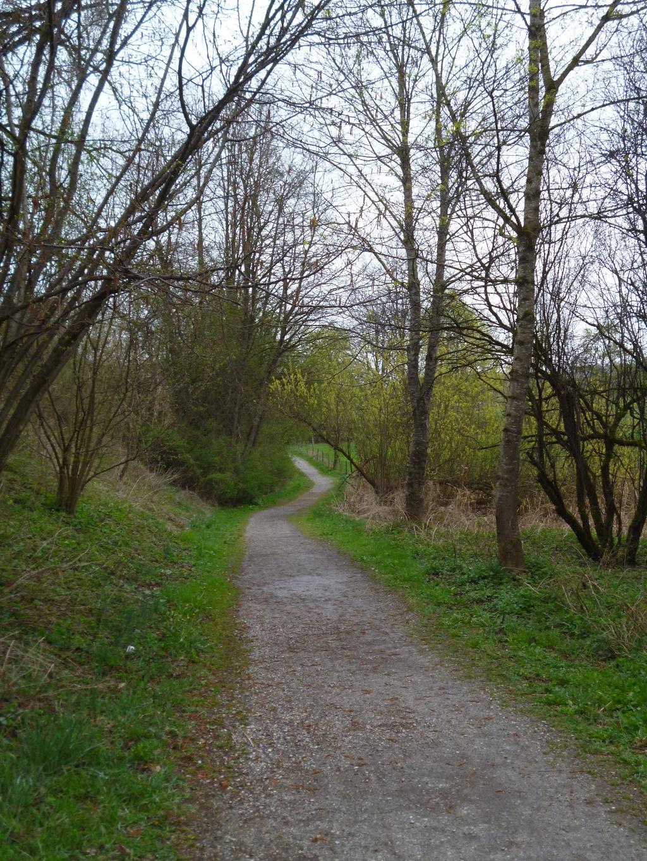 Idyllisch führt der Fußweg vom Dietlhofer See in Richtung Nordosten. (Monika Heindl)