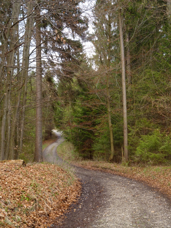 Auf breiten Forstwegen geht es durch den Wald. (Monika Heindl)