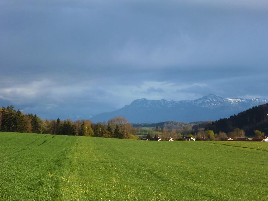 Dreht man den Kopf etwas weiter nach Osten, so genießt man einen eindrucksvollen Blick auf die - hinter den Häusern von Deutenhausen emporragende - Alpenkette. (Monika Heindl)