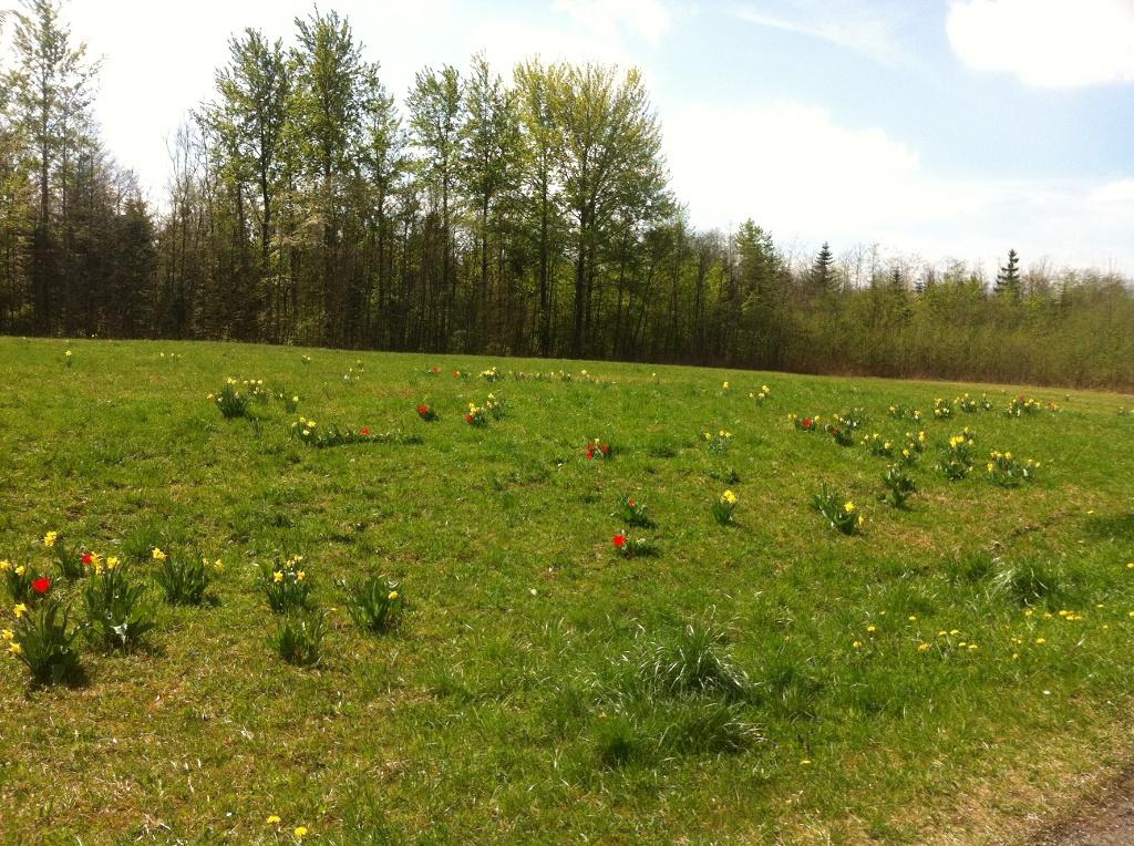 Erholungspark Berghalde mit Frühblühern (Antonie Schmid)