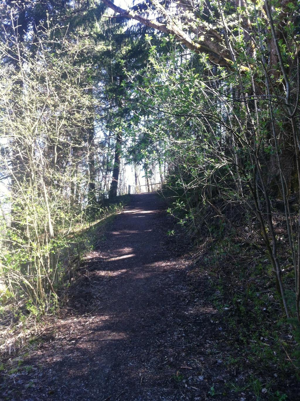Über einen Forstweg kommen wir zur Hochfläche Berghalde (Antonie Schmid)