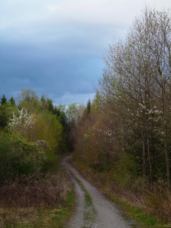 Bald wird der Wald wieder heller und es geht auf ruhigen Forstwegen zurück in Richtung Dietlhofer See. (Monika Heindl)