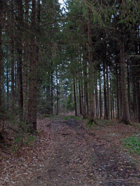 Der anfangs etwas unscheinbare Forstweg führt tief hinein in den dichten Wald südlich des Weilers Dietlhofen. (Monika Heindl)