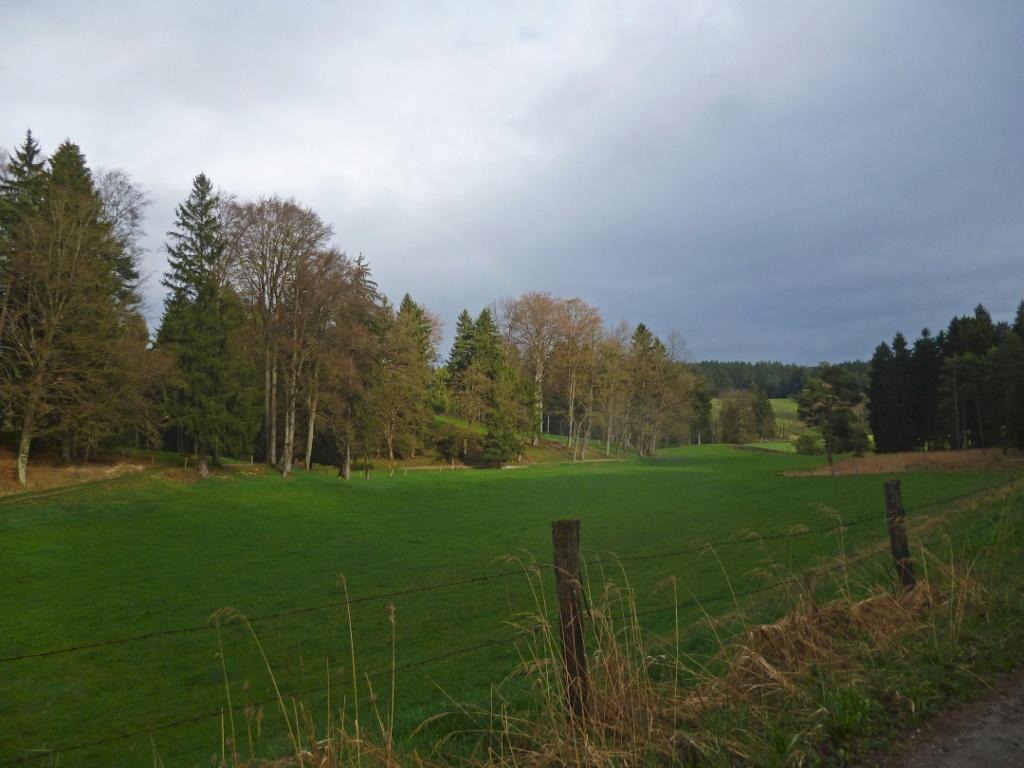Der Weg führt teils über saftig grüne Wiesen und Felder, teils durch kleine Wäldchen. (Monika Heindl)