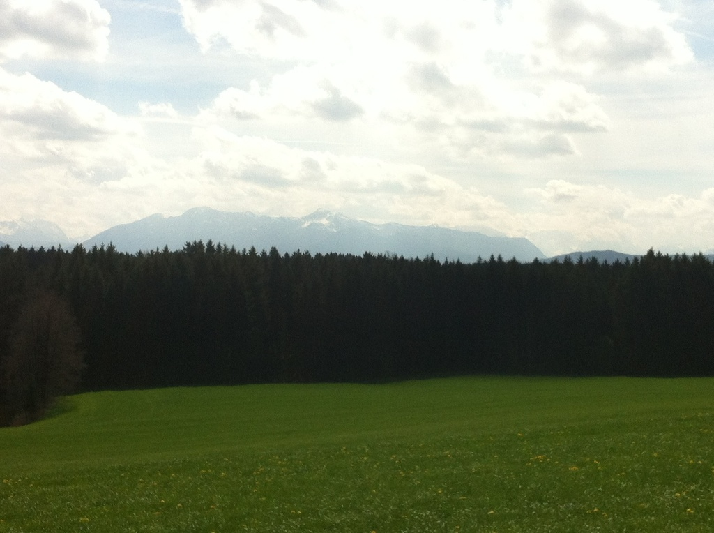 Hinter dem Waldgebiet erheben sich die Alpen majestätisch. (Antonie Schmid)