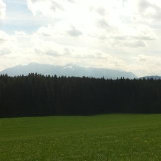 Hinter dem Waldgebiet erheben sich die Alpen majestätisch.
