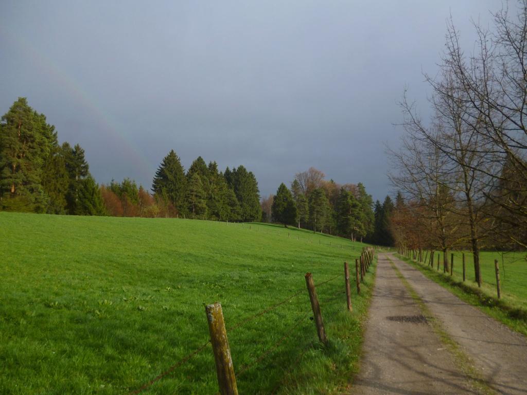 Saftig grüne Wiesen wechseln sich mit mehr oder weniger lichten Wäldern ab. (Monika Heindl)