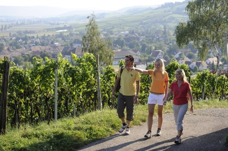 Weinwanderung durch die Rebberge