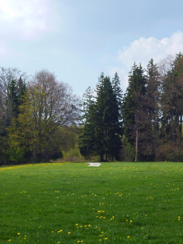 Über saftig grüne Wiesen schlängelt sich der Weg am Naturschutzgebiet Schwarzlaichmoor entlang. (Monika Heindl)