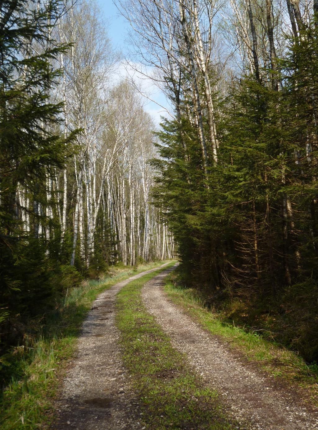 Hin und wieder werden kurze Waldstücke durchquert. (Monika Heindl)