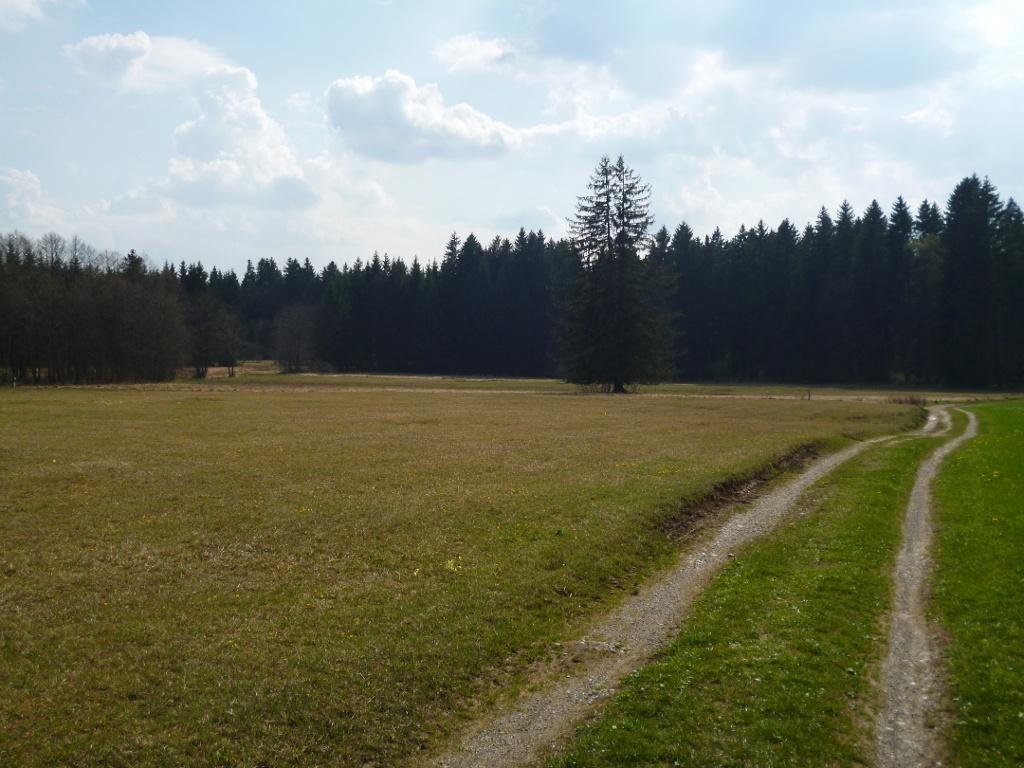 Der Weg führt weiter durch das wunderschöne Moorgebiet. (Monika Heindl)