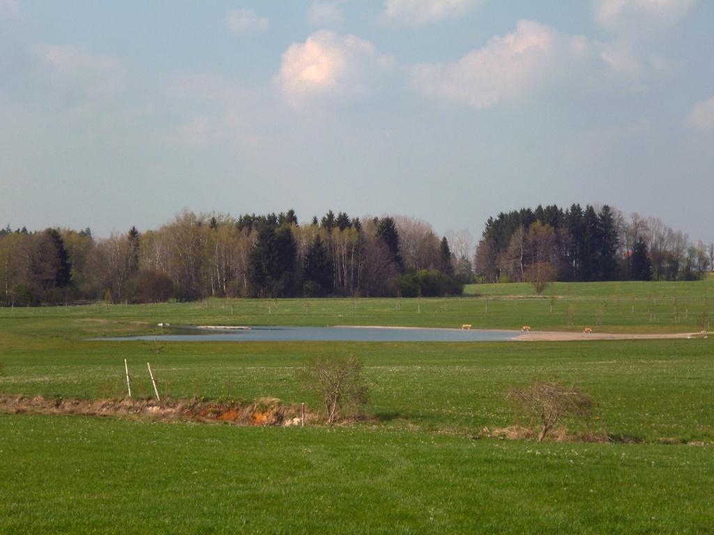 Blick auf den idyllisch am Rand des Naturschutzgebiets Schwarzlaichmoor gelegenen Badesee. (Monika Heindl)
