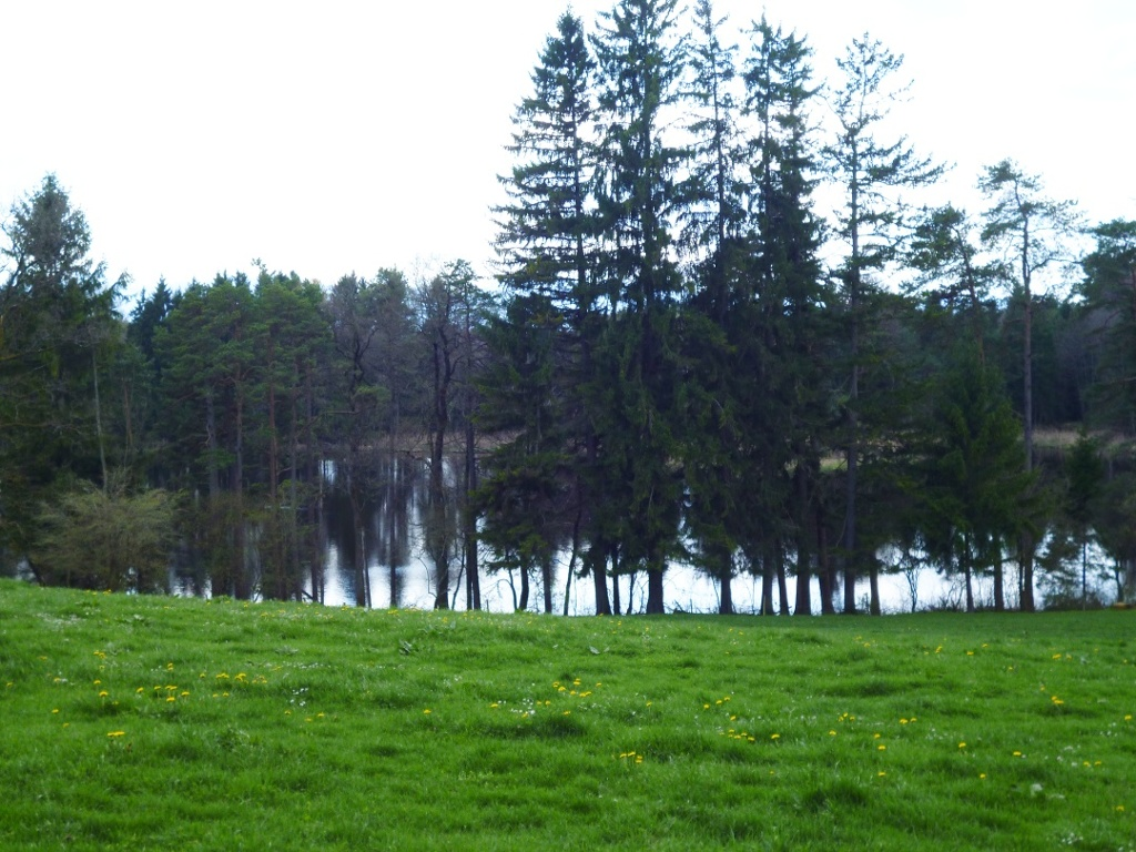 Hinter den Bäumen versteckt liegt der Fernweiher. (Monika Heindl)