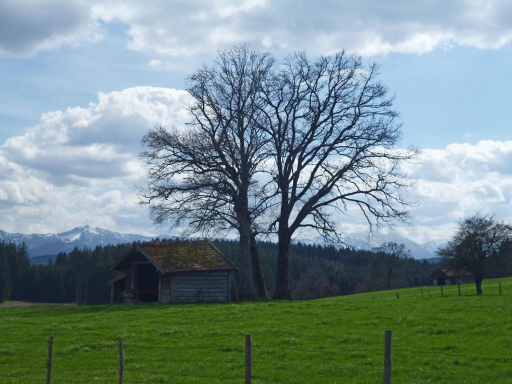 Vom Abzweig zu den Weilern Weidwies, Untersiffelhofen und Schwarzenbach bietet sich ein wunderschöner Blick auf die Alpenkette. (Monika Heindl)