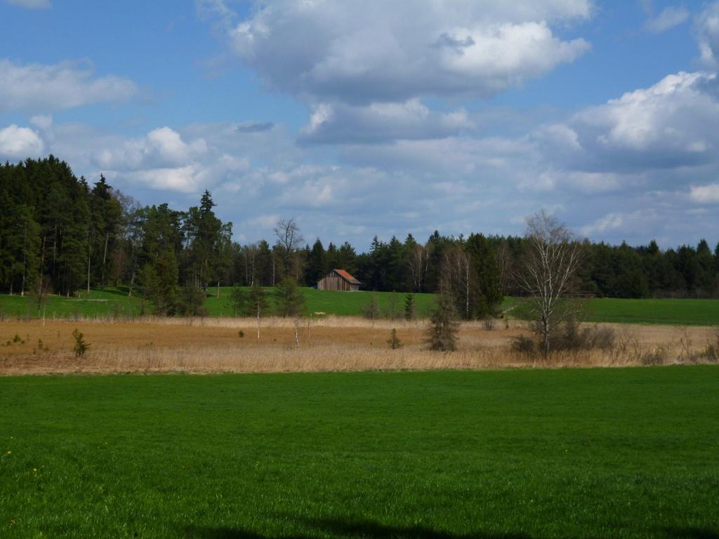Blick über das idyllische Moorgebiet östlich des Pollinger Weihers. (Monika Heindl)