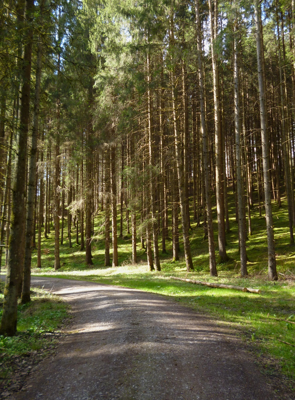Auf ruhigen Forstwegen geht es vom Pollinger Weiher durch den Wald in Richtung Nordosten. (Monika Heindl)