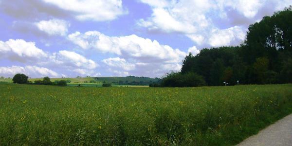 Ausläufer des Walds, Blick auf Weinberge