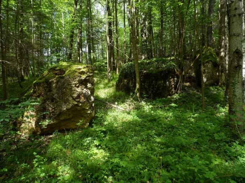 Findlinge im Wald