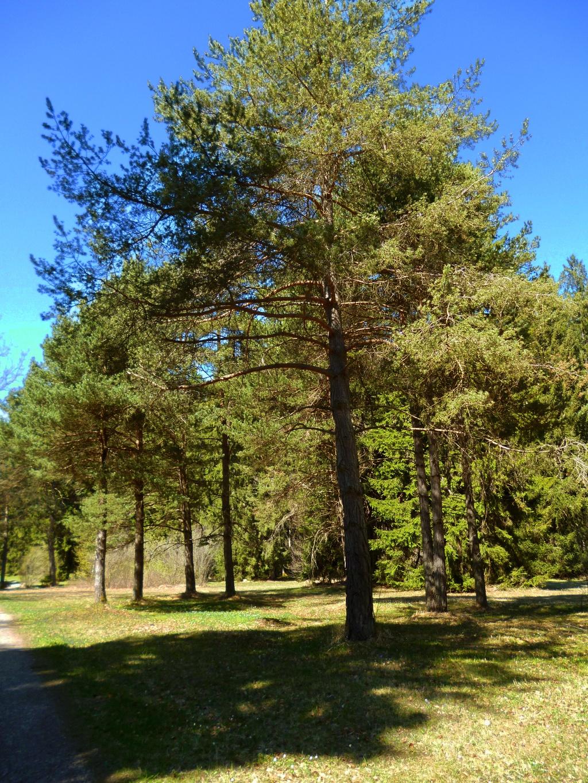 Die parkähnliche Landschaft der Heidewiese. (Monika Heindl)
