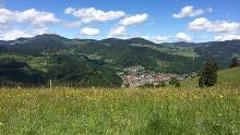 Urwaldpfad & Turmsteig