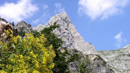 Hochkogel vom Abstieg zum Radmerhals im Rückblick