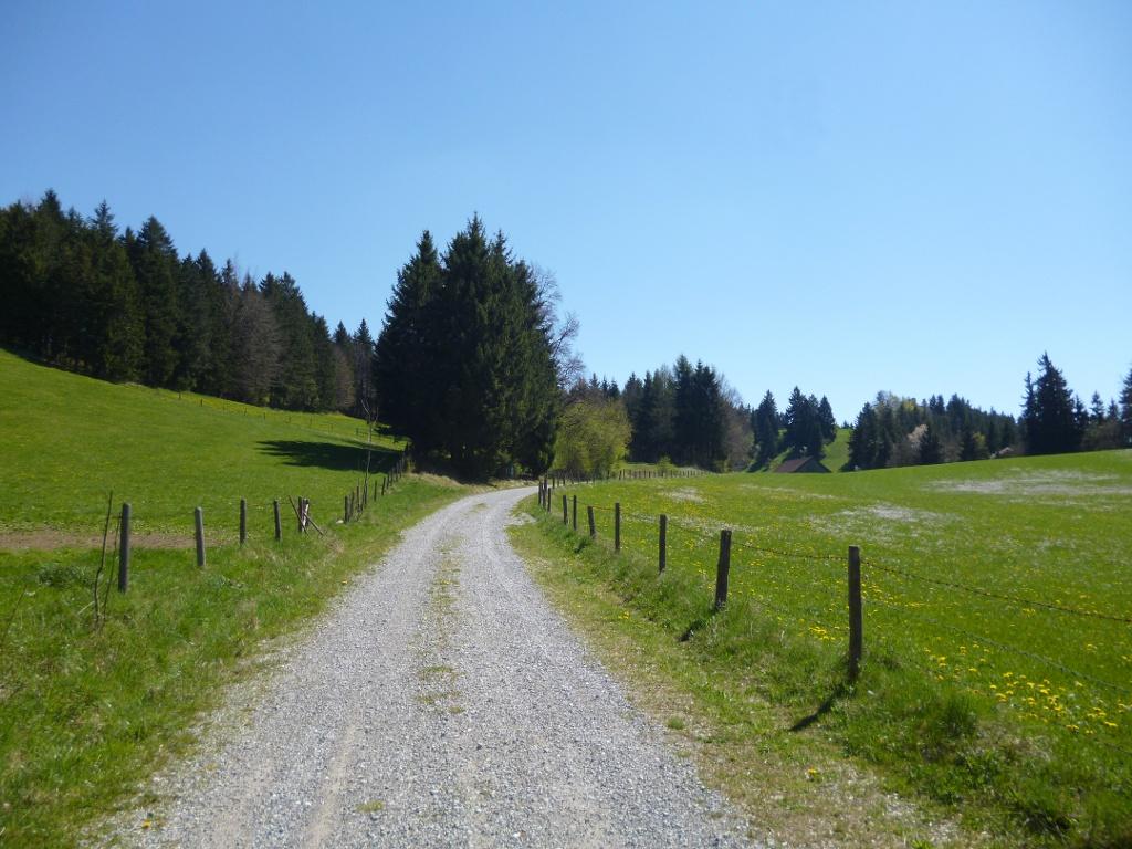 Der Weg von Schongau hinauf in Richtung Schlossberg und Kalvarienberg führt zuletzt idyllisch durch saftig grüne Wiesen. (Monika Heindl)