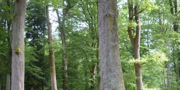 Rastplatz unter hohen Bäumen am Sauerbrunnen